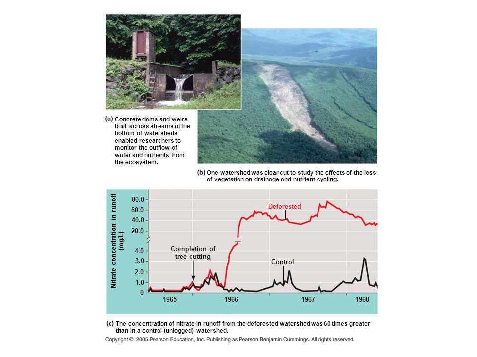 Concrete dams and weirs built across streams at the bottom of watersheds enabled researchers to monitor the outflow of water and nutrients from the ecosystem.