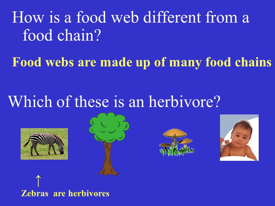 How is a food web different from a food chain.