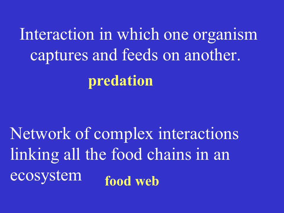 Interaction in which one organism captures and feeds on another.