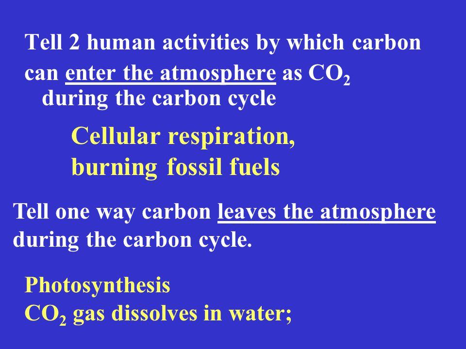 Tell 2 human activities by which carbon can enter the atmosphere as CO 2 during the carbon cycle Cellular respiration, burning fossil fuels Tell one way carbon leaves the atmosphere during the carbon cycle.