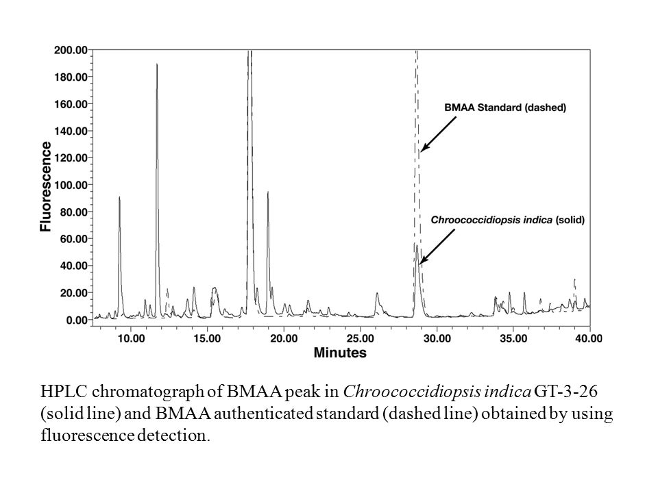 HPLC chromatograph of BMAA peak in Chroococcidiopsis indica GT-3-26 (solid line) and BMAA authenticated standard (dashed line) obtained by using fluor
