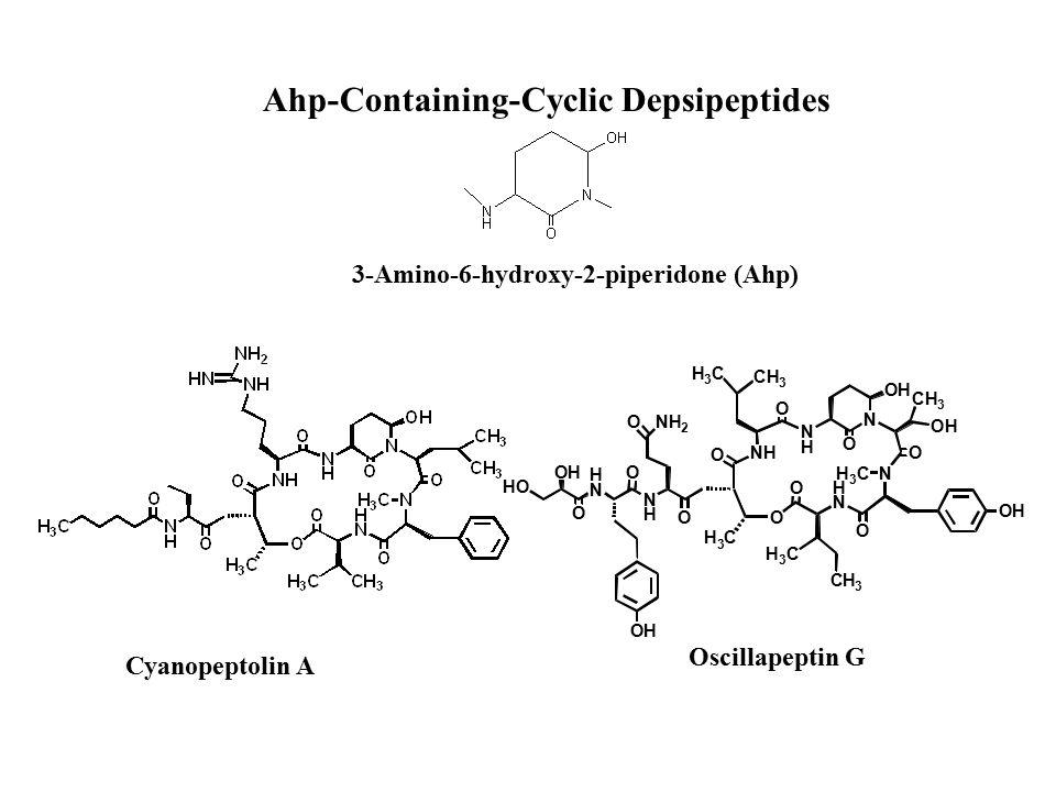 Cyanopeptolin A Oscillapeptin G 3-Amino-6-hydroxy-2-piperidone (Ahp) Ahp-Containing-Cyclic Depsipeptides H N N H NH N H N OH N H N H 3 C O H 3 C O O O O O OH O H 3 C O O CH 3 H 3 C CH 3 OH CH 3 NH 2 O OH O OH HO