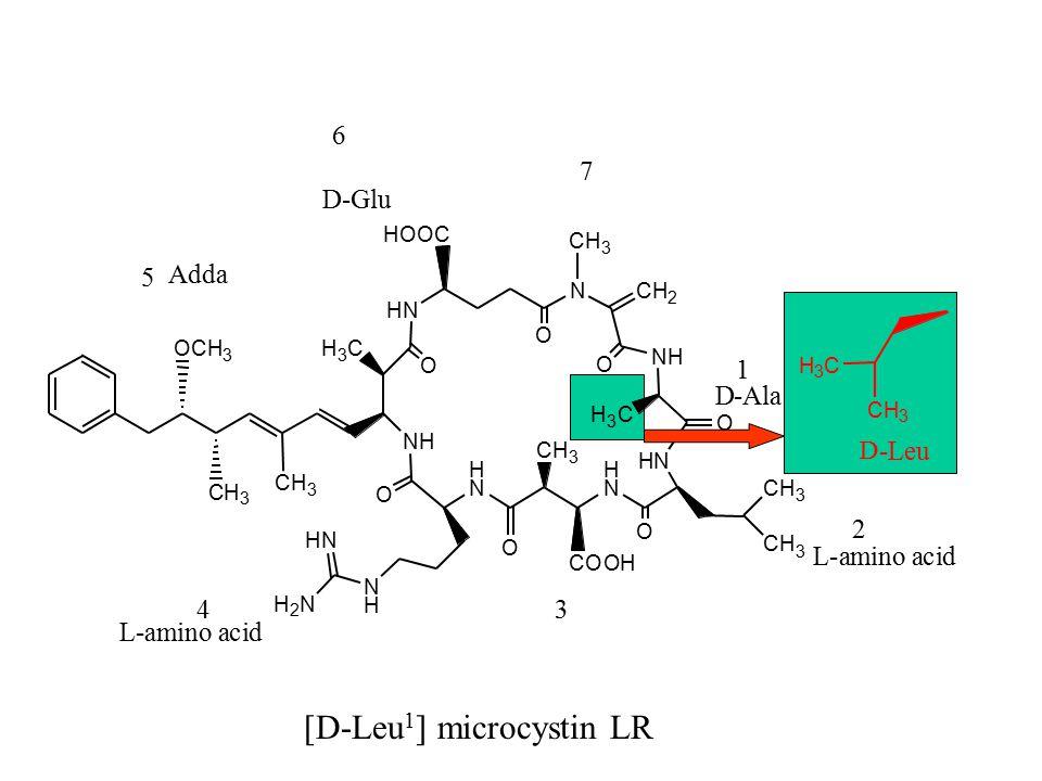 OCH 3 CH 3 CH 3 HN NCH 2 O HOOC NH H 3 C O NH HN O O H 3 C H N O CH 3 CH 3 H N COOH CH 3 CH 3 O O N H H 2 N HN microcystin CH CH 3 Dhb- H 3 C CH 3 1 2 34 5 6 7 L-amino acid L-amino acid D-Ala D -Leu D-Glu ( Z ) and ( E ) Adda D- [D-Leu 1 ] microcystin LR