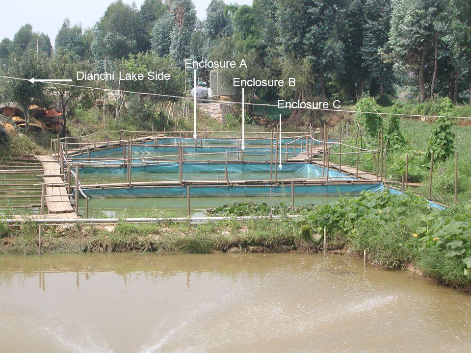 Enclosure A Enclosure B Enclosure C Dianchi Lake Side