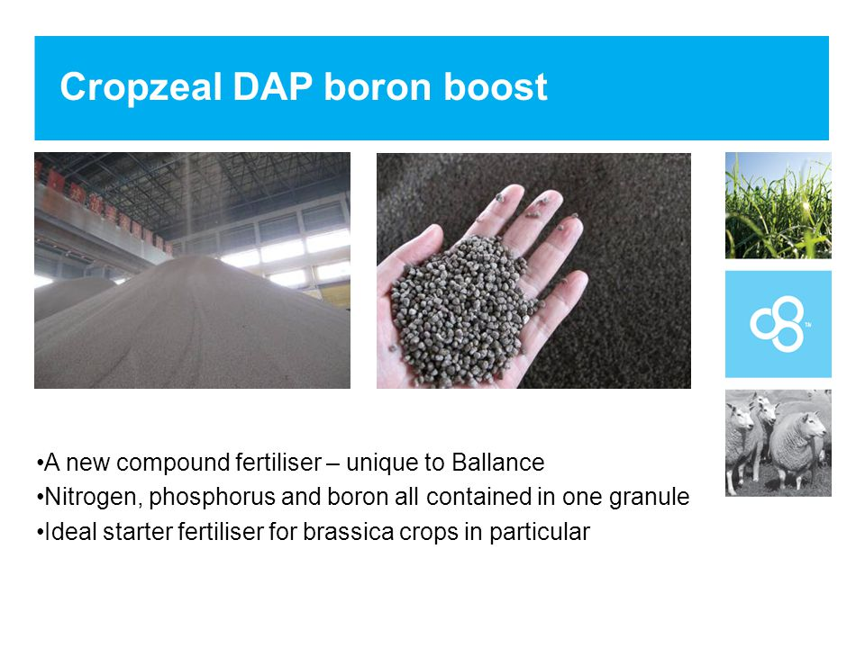 Cropzeal DAP boron boost A new compound fertiliser – unique to Ballance Nitrogen, phosphorus and boron all contained in one granule Ideal starter fertiliser for brassica crops in particular