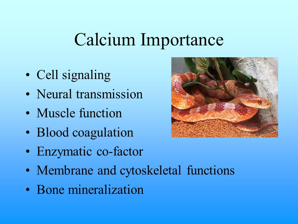 Calcium Clinical Pathology Normal total serum calcium: 8-11mg/dL in most reptiles Normal ionized calcium in Green Iguana: 1.47 +/- 0.104 mmol/L