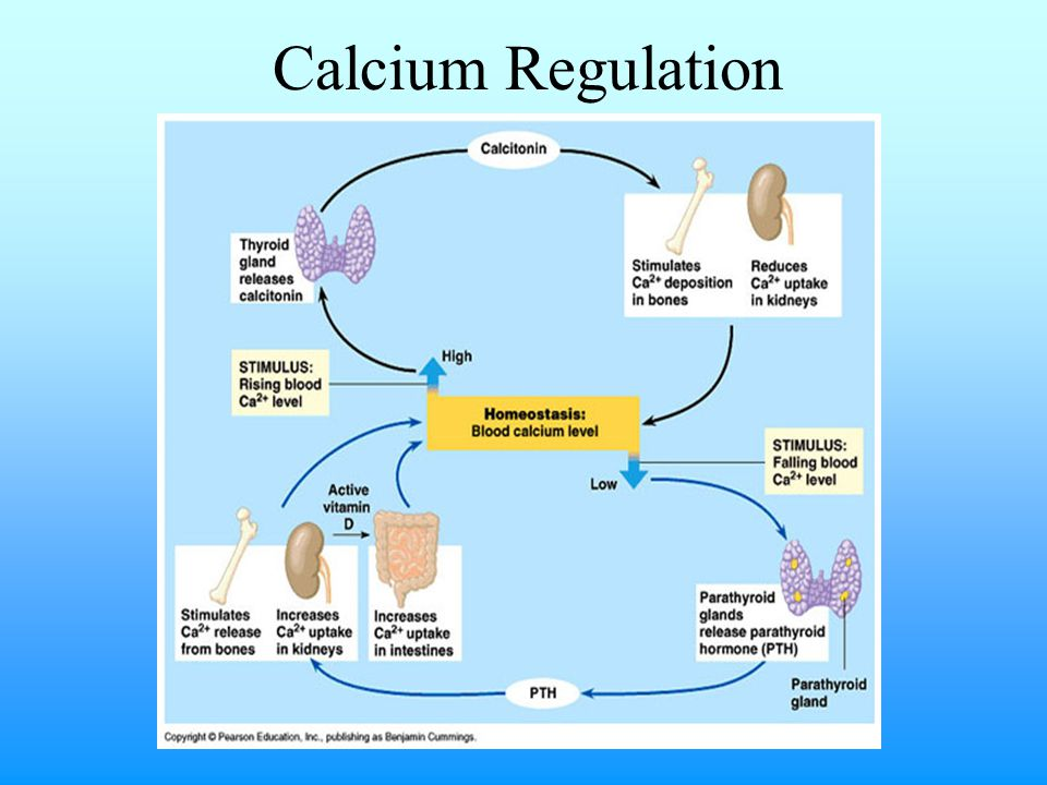 Hypocalcemia (<8.0 mg/dL) Dietary deficiency Excessive dietary phosphorus Secondary nutritional hyperparathyroidism Vitamin D3 deficiency (dietary or lack of UV light) Hypoablbuminemia Hypoparathyroidism