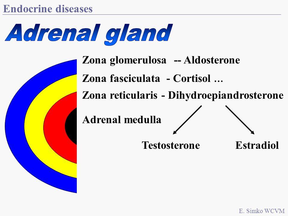 Endocrine diseases E. Simko WCVM Zona glomerulosa -- Aldosterone Zona fasciculata - Cortisol … Zona reticularis - Dihydroepiandrosterone Adrenal medul
