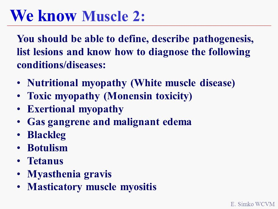 We know Muscle 2: E.