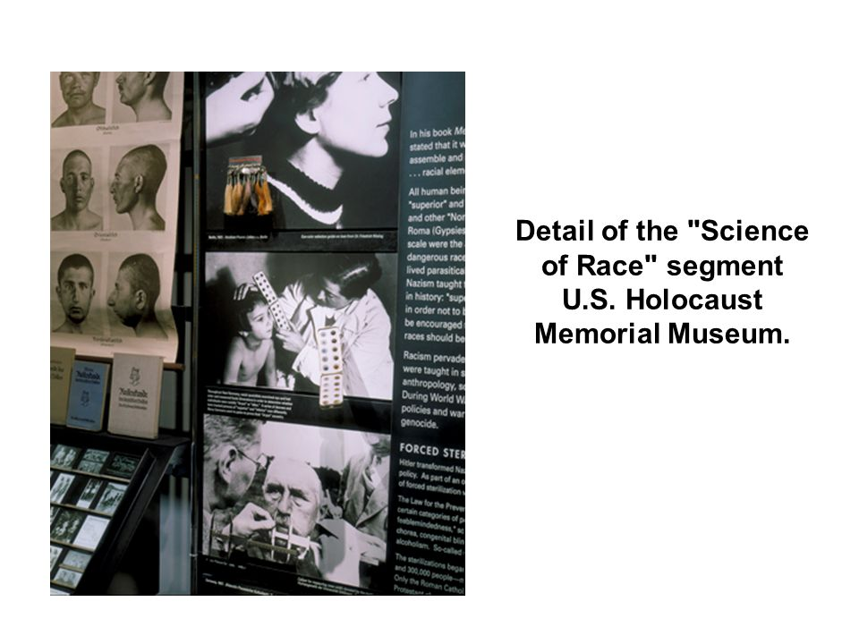 Detail of the Science of Race segment U.S. Holocaust Memorial Museum.
