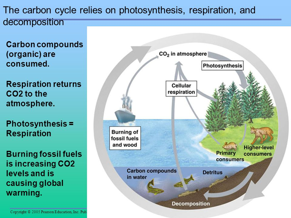 Copyright © 2005 Pearson Education, Inc. Publishing as Benjamin Cummings The carbon cycle relies on photosynthesis, respiration, and decomposition Car