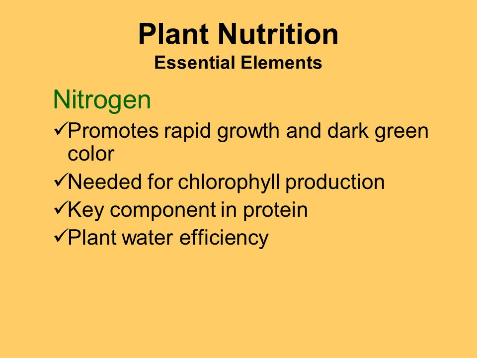 Plant Nutrition Essential Elements Nitrogen Promotes rapid growth and dark green color Needed for chlorophyll production Key component in protein Plant water efficiency