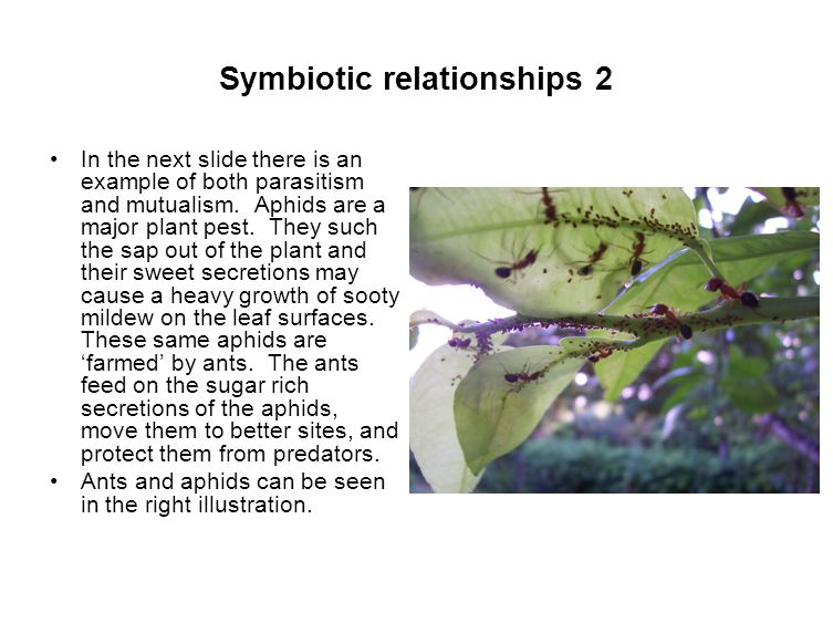 Symbiotic relationships 2 In the next slide there is an example of both parasitism and mutualism.