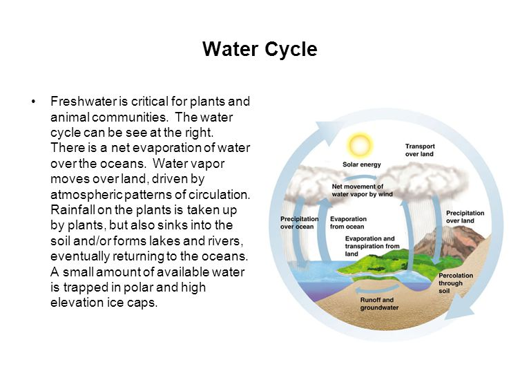 Water Cycle Freshwater is critical for plants and animal communities.