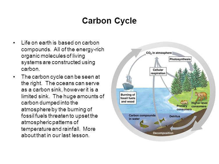 Carbon Cycle Life on earth is based on carbon compounds.