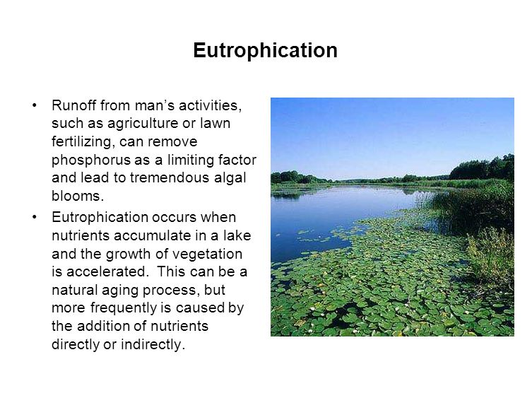 Eutrophication Runoff from man's activities, such as agriculture or lawn fertilizing, can remove phosphorus as a limiting factor and lead to tremendous algal blooms.