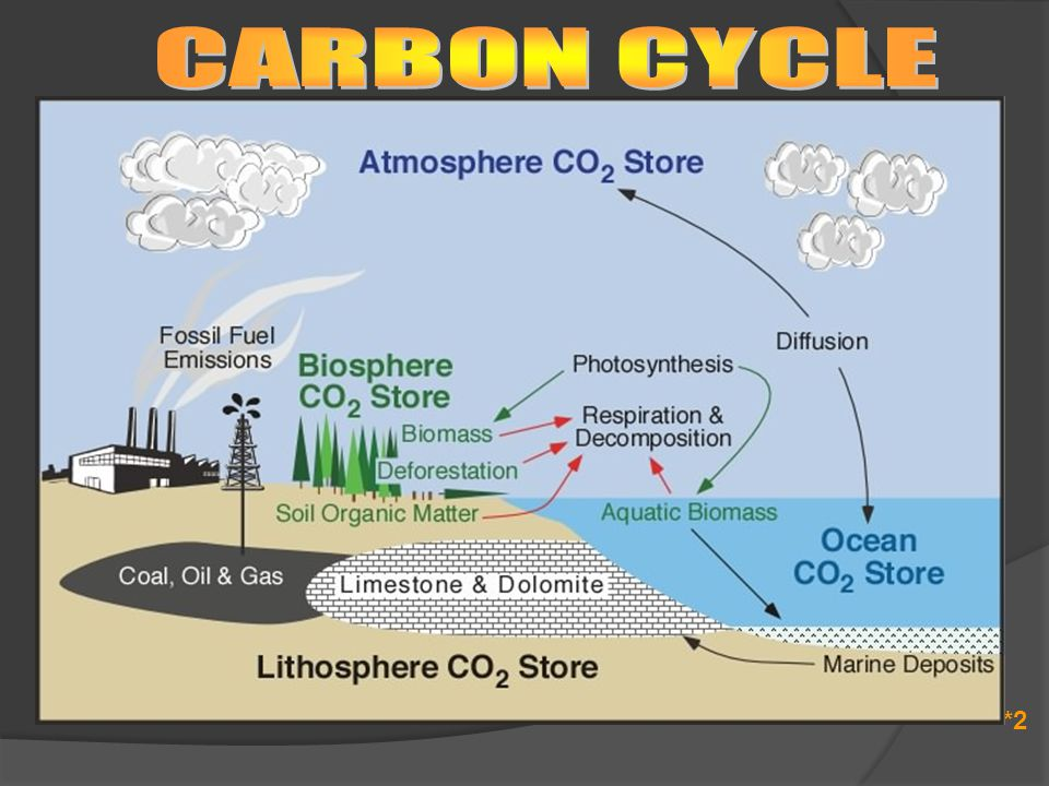 Carbon Cycle  Carbon returns to the atmosphere - cellular respiration - combustion  All living things are biotic reservoirs  The atmosphere and water are abiotic reservoirs  Carbon Sink – A sink is a part of the cycle which removes a nutrient from the cycle for long periods of time - Limestone - Fossil Fuels