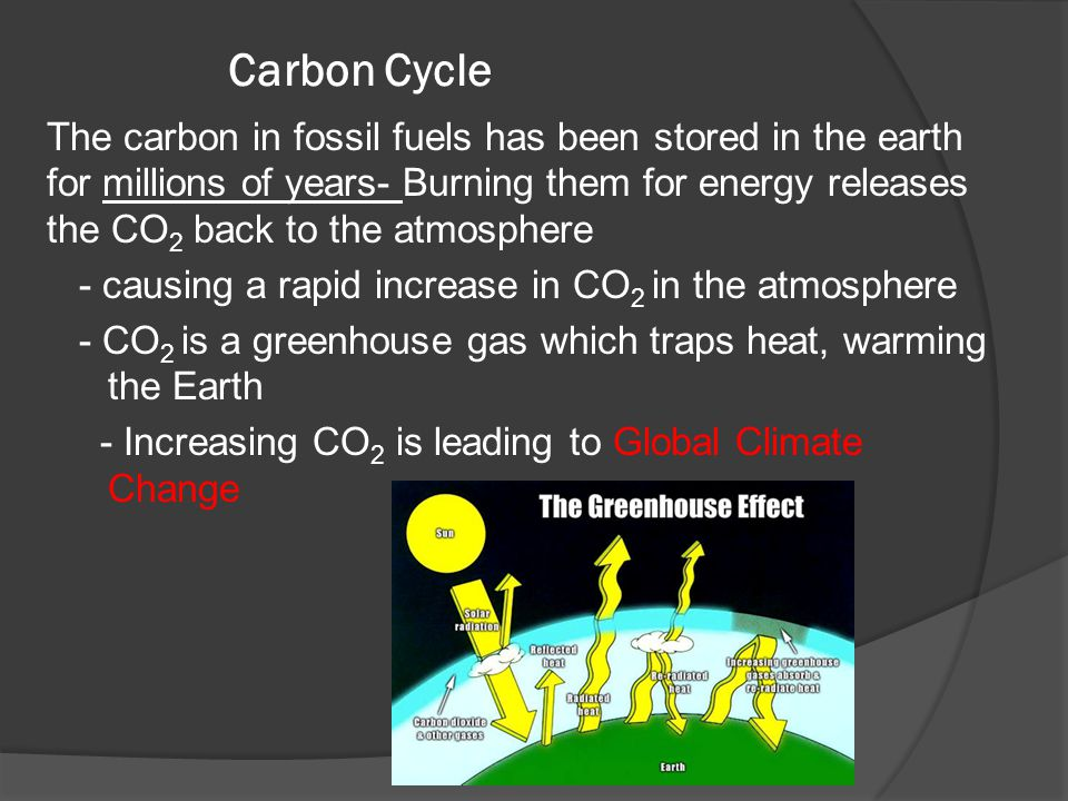 Carbon Cycle The carbon in fossil fuels has been stored in the earth for millions of years- Burning them for energy releases the CO 2 back to the atmo
