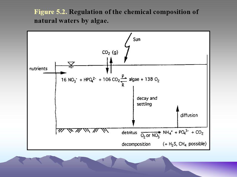 Figure 5.11. Flowchart for phosphorus kinetics in a dynamic ecosystem model