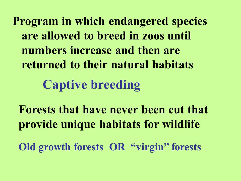 Program in which endangered species are allowed to breed in zoos until numbers increase and then are returned to their natural habitats Captive breedi