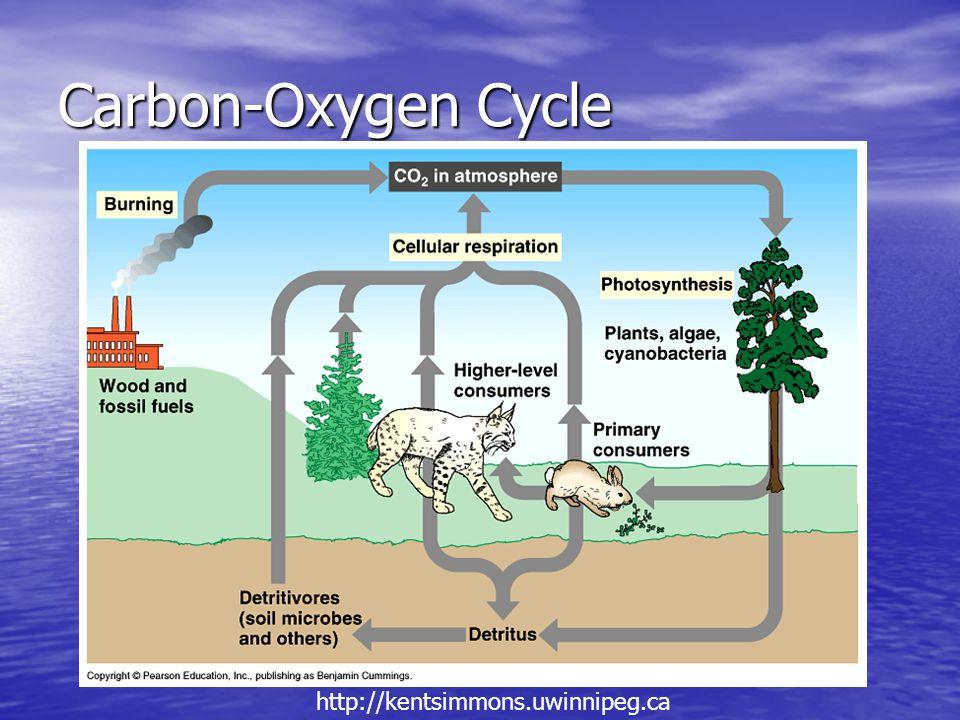 Carbon-Oxygen Cycle http://kentsimmons.uwinnipeg.ca