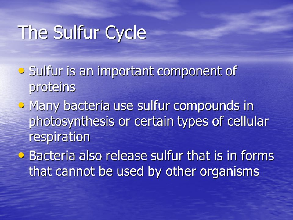 The Sulfur Cycle Sulfur is an important component of proteins Sulfur is an important component of proteins Many bacteria use sulfur compounds in photosynthesis or certain types of cellular respiration Many bacteria use sulfur compounds in photosynthesis or certain types of cellular respiration Bacteria also release sulfur that is in forms that cannot be used by other organisms Bacteria also release sulfur that is in forms that cannot be used by other organisms
