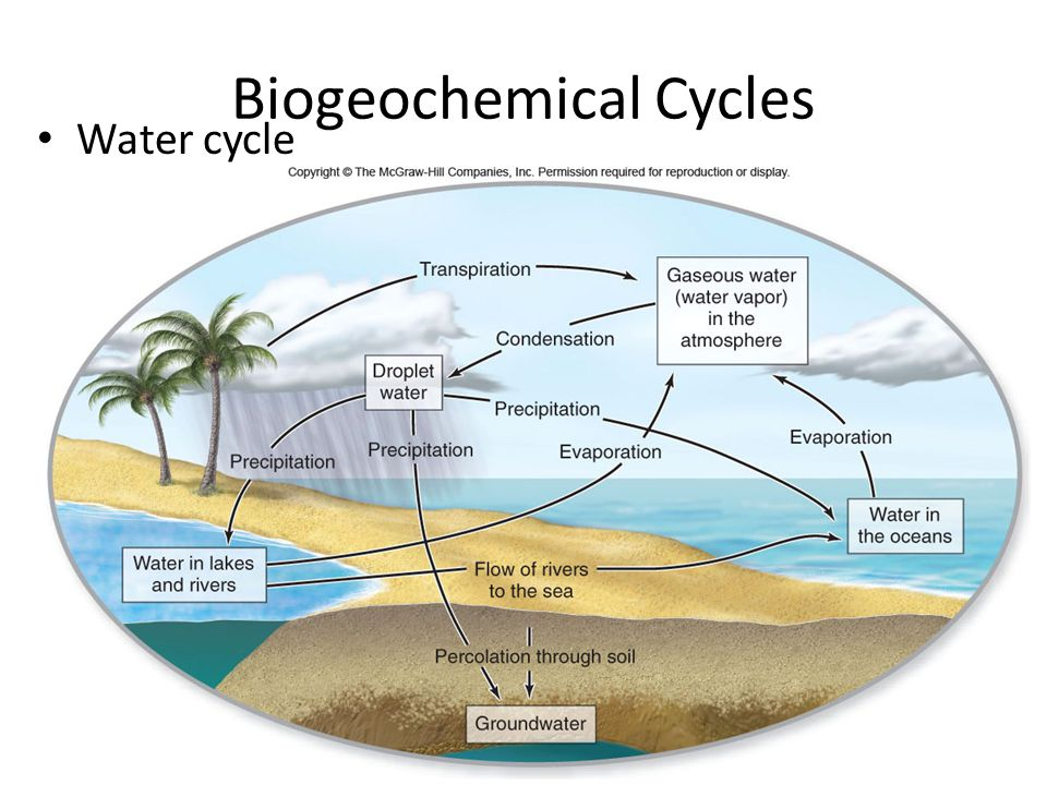 5 Biogeochemical Cycles Water cycle