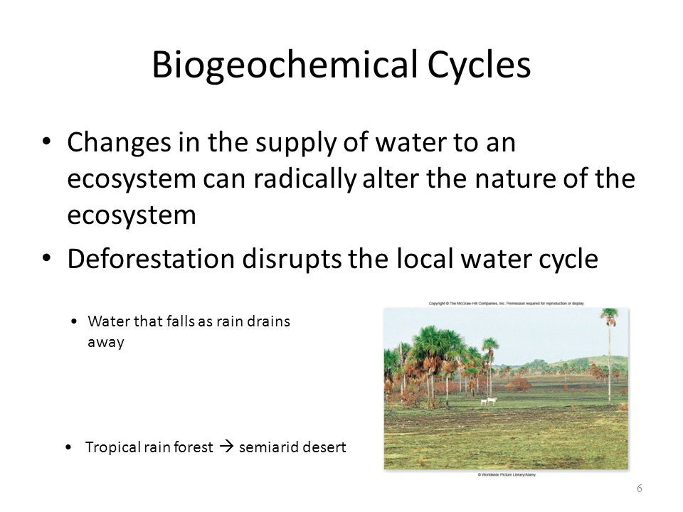 7 Biogeochemical Cycles Nitrogen Cycle – component of proteins and nucleic acids – Usually the element in shortest supply – Availability Most cannot use N 2 (gas) Use NH 3, and NO 3 -