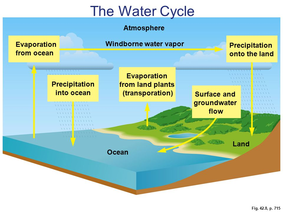 Fig. 42.8, p. 715 Land Ocean Precipitation onto the land Surface and groundwater flow Evaporation from land plants (transporation) Precipitation into