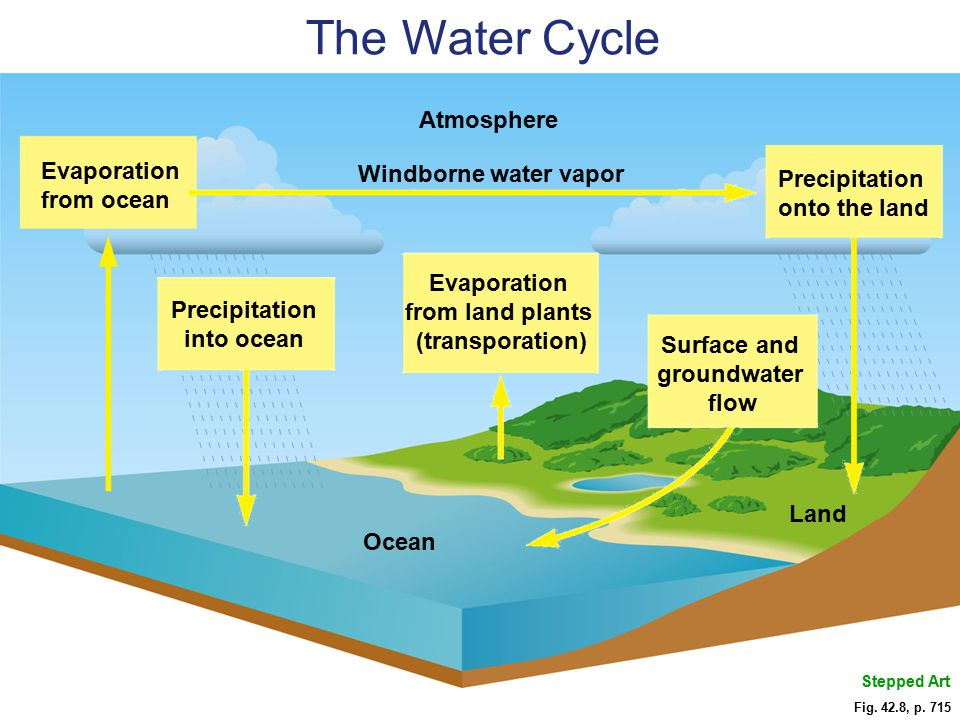 Fig. 42.8, p. 715 Land Ocean Surface and groundwater flow Evaporation from land plants (transporation) Precipitation into ocean Atmosphere Precipitati
