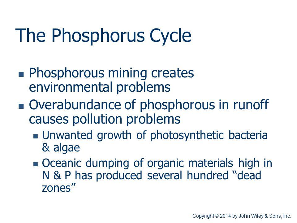 The Phosphorus Cycle Phosphorous mining creates environmental problems Overabundance of phosphorous in runoff causes pollution problems Unwanted growt
