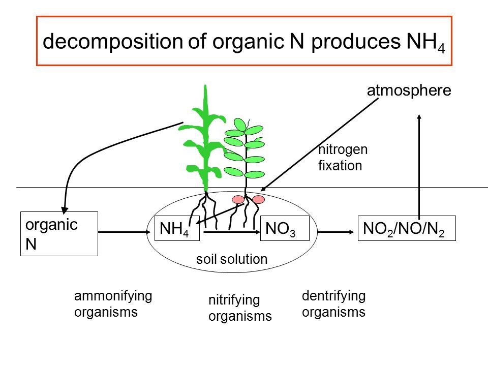 decomposition of organic N produces NH 4 organic N NH 4 ammonifying organisms NO 3 nitrifying organisms NO 2 /NO/N 2 dentrifying organisms atmosphere nitrogen fixation soil solution