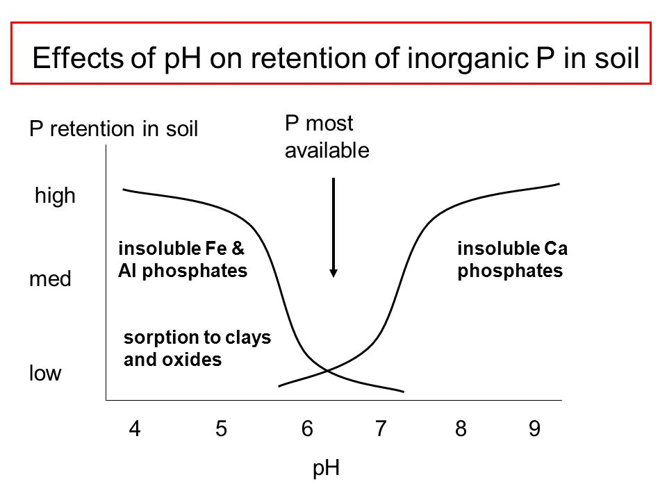 Effects of pH on retention of inorganic P in soil 4 5 6 7 8 9 high med low insoluble Fe & Al phosphates sorption to clays and oxides insoluble Ca phosphates pH P retention in soil P most available
