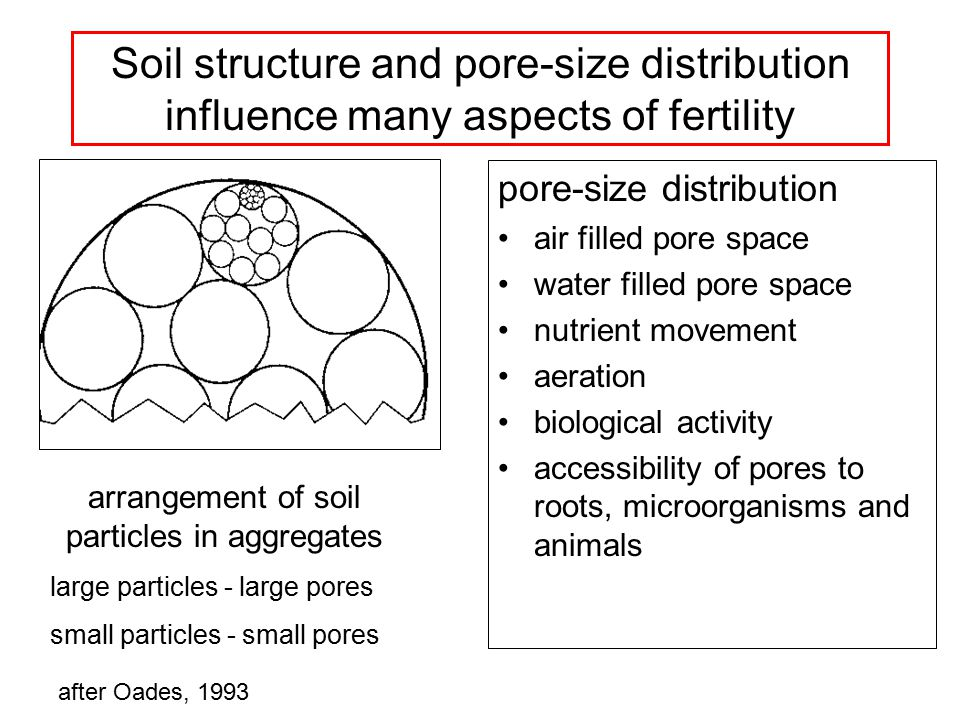 Soil structure and pore-size distribution influence many aspects of fertility pore-size distribution air filled pore space water filled pore space nutrient movement aeration biological activity accessibility of pores to roots, microorganisms and animals arrangement of soil particles in aggregates large particles - large pores small particles - small pores after Oades, 1993