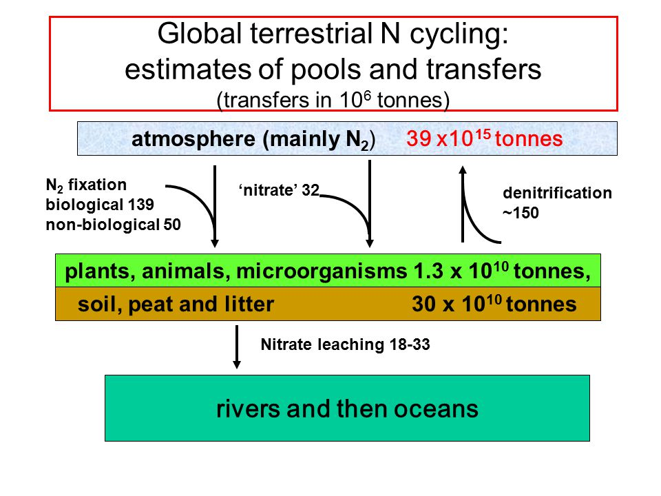 Global terrestrial N cycling: estimates of pools and transfers (transfers in 10 6 tonnes) atmosphere (mainly N 2 ) 39 x10 15 tonnes N 2 fixation biological 139 non-biological 50 'nitrate' 32 rivers and then oceans denitrification ~150 Nitrate leaching 18-33 plants, animals, microorganisms 1.3 x 10 10 tonnes, soil, peat and litter 30 x 10 10 tonnes