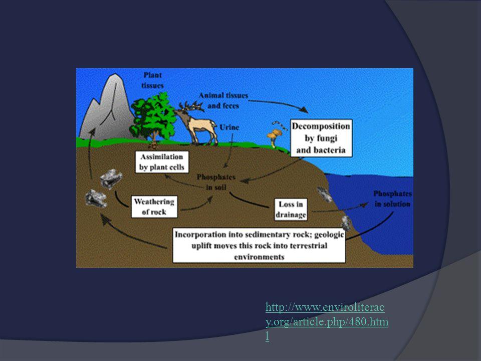 http://www.enviroliterac y.org/article.php/480.htm l