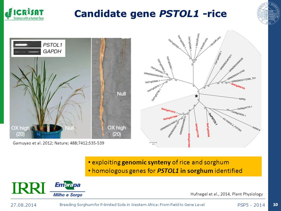 27.08.2014PSP5 - 2014 Breeding Sorghum for P-limited Soils in Western Africa: From Field to Gene Level Gamuyao et al.