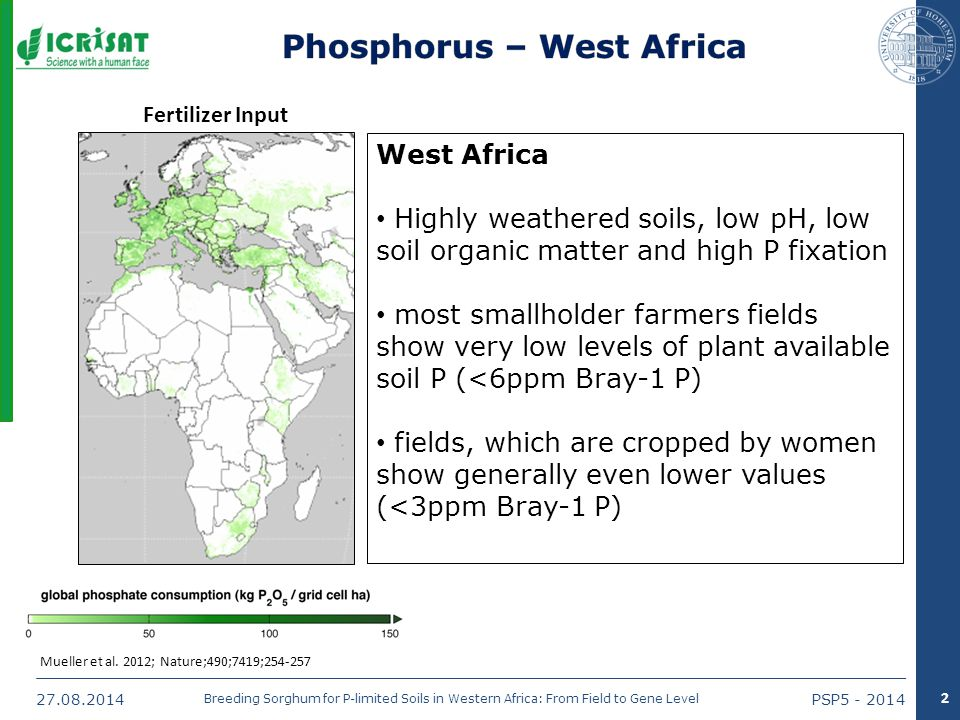 27.08.2014PSP5 - 2014 Breeding Sorghum for P-limited Soils in Western Africa: From Field to Gene Level Mueller et al.