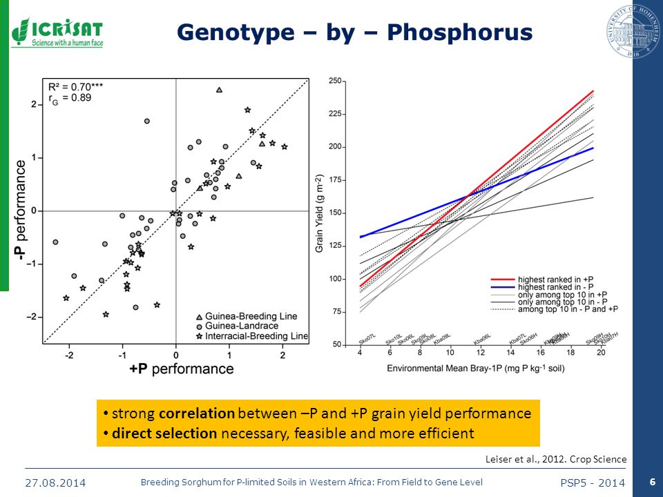27.08.2014PSP5 - 2014 Breeding Sorghum for P-limited Soils in Western Africa: From Field to Gene Level 6 strong correlation between –P and +P grain yield performance direct selection necessary, feasible and more efficient Leiser et al., 2012.