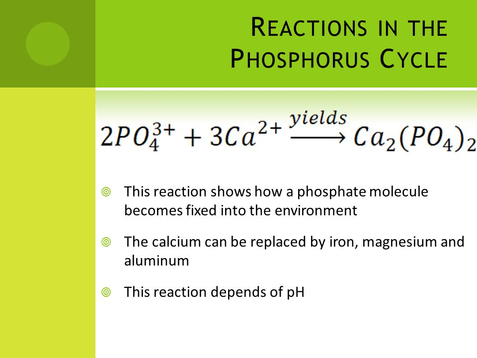 R EACTIONS IN THE P HOSPHORUS C YCLE  This reaction shows how a phosphate molecule becomes fixed into the environment  The calcium can be replaced by iron, magnesium and aluminum  This reaction depends of pH
