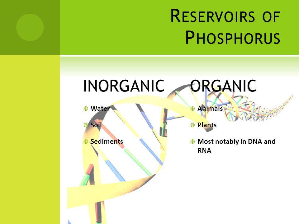 R ESERVOIRS OF P HOSPHORUS INORGANIC  Water  Soil  Sediments ORGANIC  Animals  Plants  Most notably in DNA and RNA