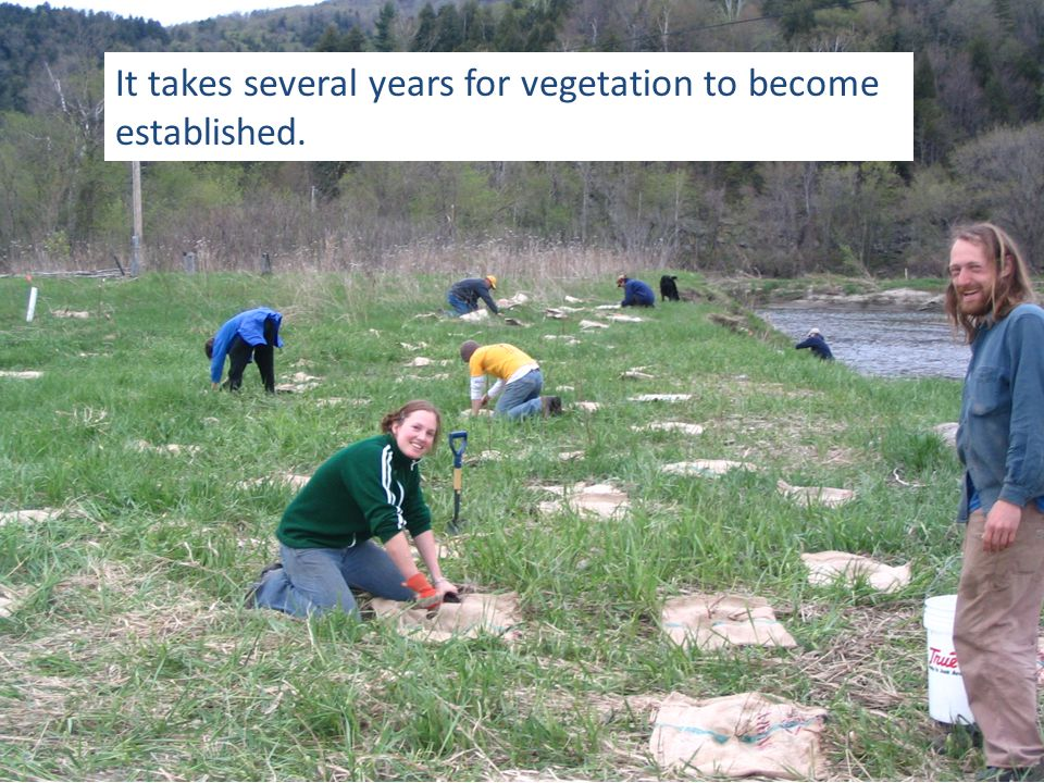 It takes several years for vegetation to become established.