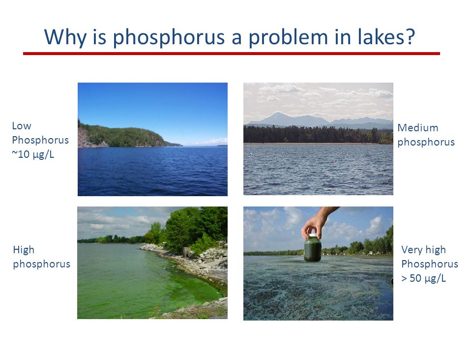 Why is phosphorus a problem in lakes.