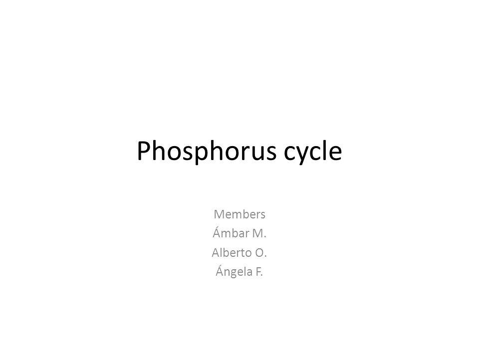Phosphorus cycle Members Ámbar M. Alberto O. Ángela F.
