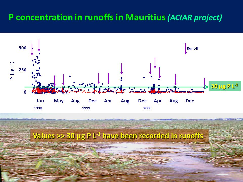 500 250 0 P (µg L -1 ) 1998 1999 2000 Jan May Aug Dec Apr Aug Dec Apr Aug Dec Runoff P concentration in runoffs in Mauritius (ACIAR project) Values >> 30 µg P L -1 have been recorded in runoffs 30 µg P L -1
