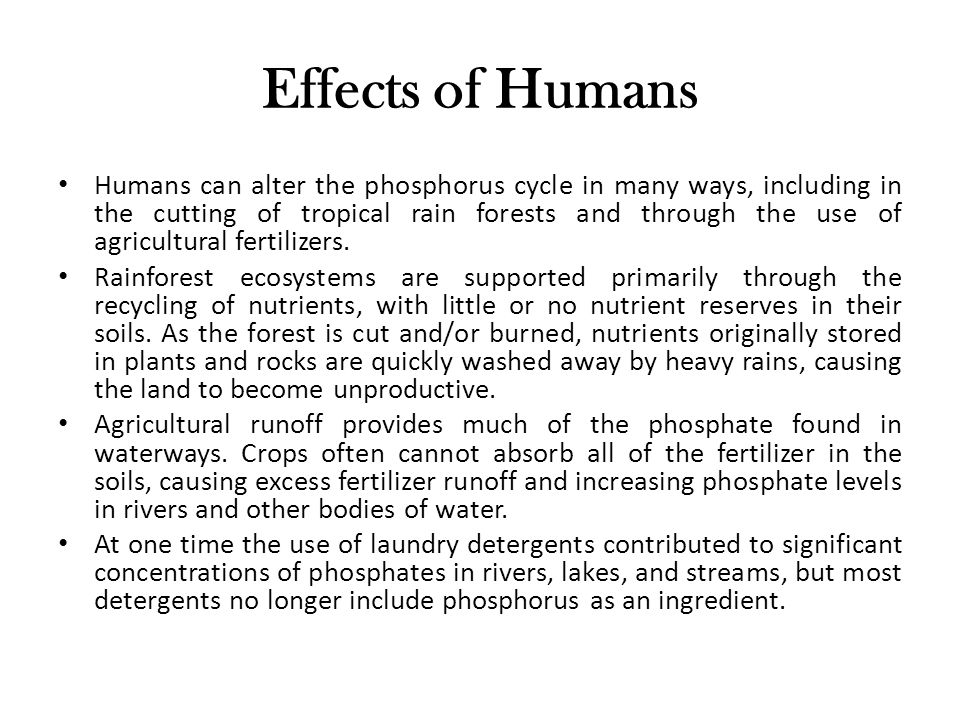 Effects of Humans Humans can alter the phosphorus cycle in many ways, including in the cutting of tropical rain forests and through the use of agricultural fertilizers.