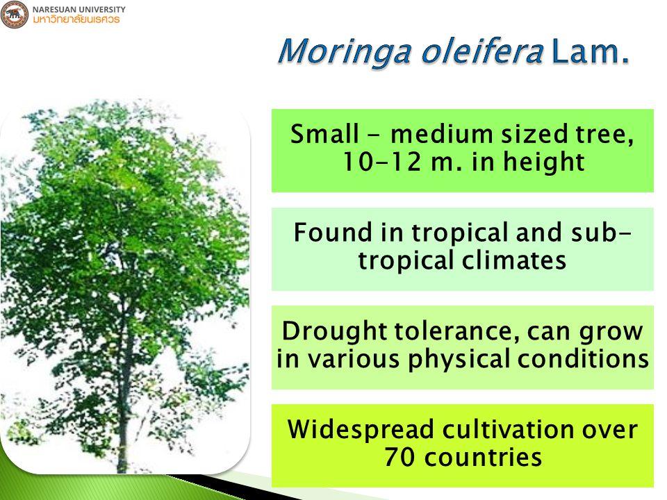 Moringa oleifera leaves contains a wide variety of phenolic compounds Monophenol, Polyphenol, Phenolic acid, etc.