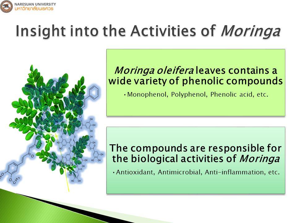  To study the effect of Moringa oleifera Lam.