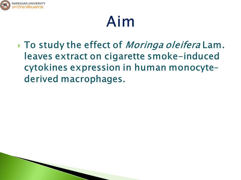 Extraction and Fractionation of Fresh Moringa oleifera Lam.