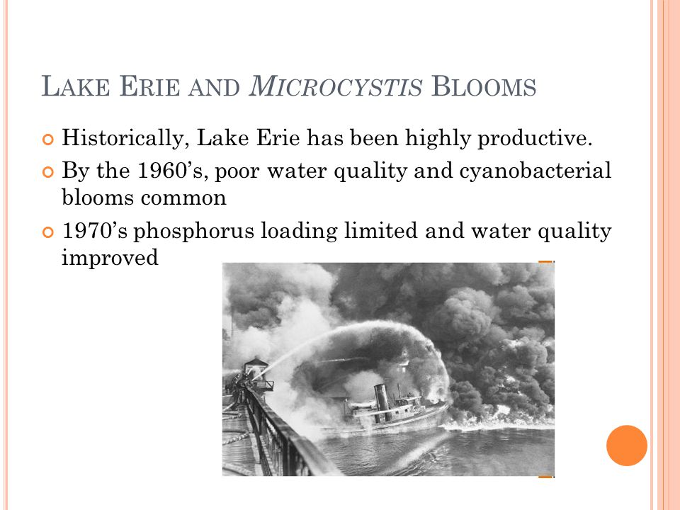 L AKE E RIE AND M ICROCYSTIS B LOOMS Historically, Lake Erie has been highly productive.